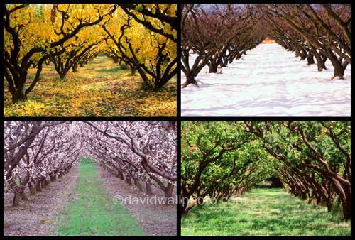 Orchard through the Seasons, New Zealand | Flickr - Photo Sharing!