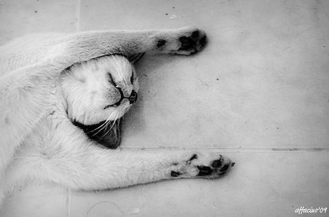 sleeping beauty : Jiro the Madcat