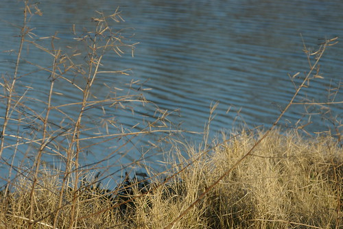 park pond texas swamp bog deussenalexanderpark victortx