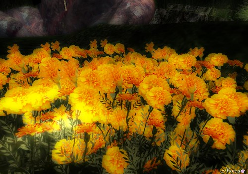 Flowers of Second Life :)
