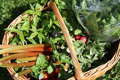 may farmers market