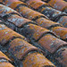 Patina on roof tiles ©Brian Smithson (Old Geordie)