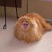 my cat by jarrodturner