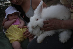 animal, rabbit, domestic rabbit, pet, angora rabbit, whiskers, rabits and hares,