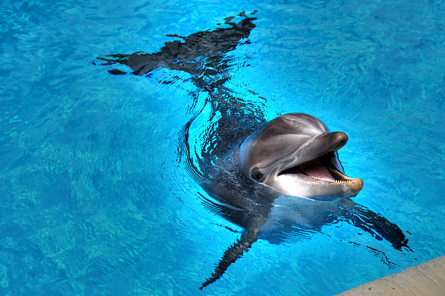 Smiling Dolphin Looking Out Of The Water Stock Photo, Picture And ...