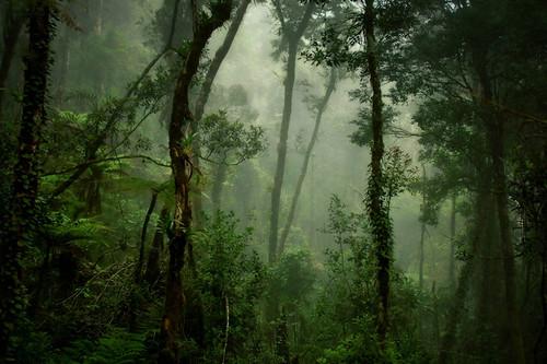 forest mount malaysia kinabalu
