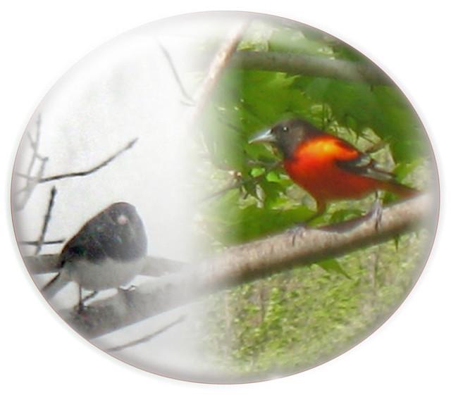 Backyard Birds Of Upstate New York - An Album On Flickr