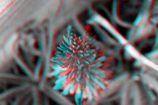 Imagenes 3D Con Lentes