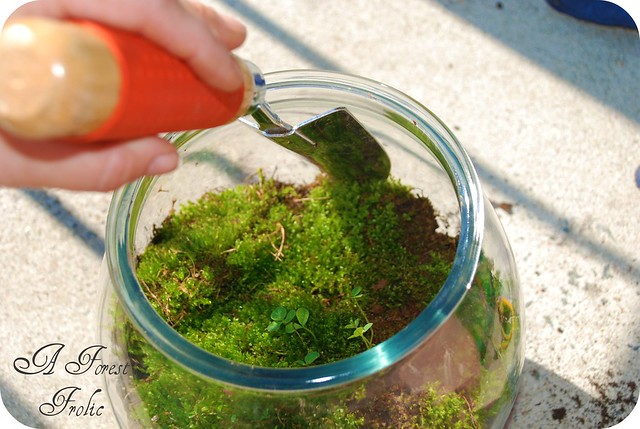 Moss terrarium 7