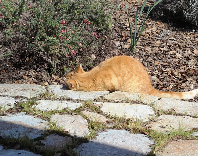 orange cat lounging in the sunny garden