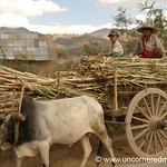 Oxen Cart - Inle Lake, Burma