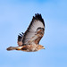 Flying hawk