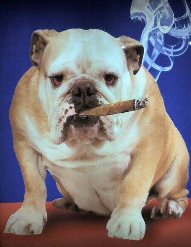20090115 Smoking Dog