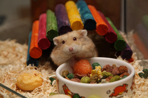 Brinquedos para roedores - Petlove - O Maior Petshop Online do Brasil