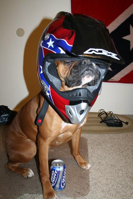 Dirt Bike Dog Flickr Photo Sharing
