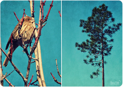 bird texture pine diptych branches evergreen digitalxpro