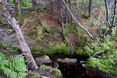 Pond in West Quoddy State Park