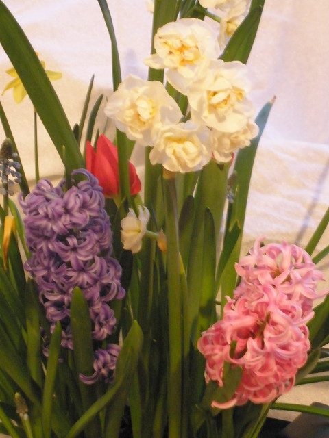 Spring Flowers in Indoor Bulb Garden