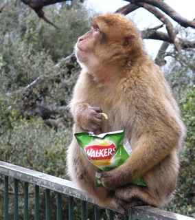Barbary ape advertising in Gibraltar