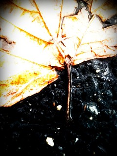 Broken Yellow Leaf In The Rain.