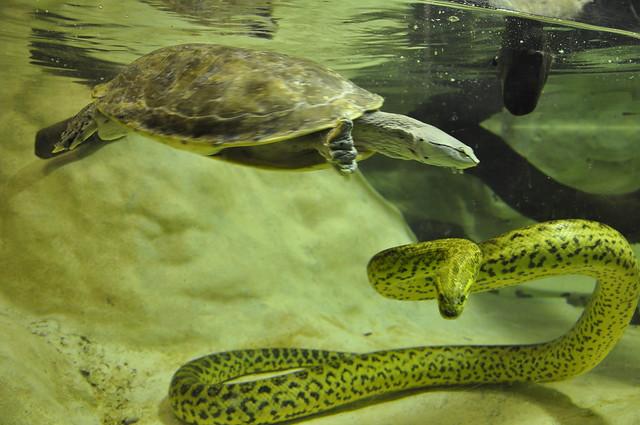 Tortue et anaconda m nagerie du jardin des plantes a for Animalerie du jardin des plantes