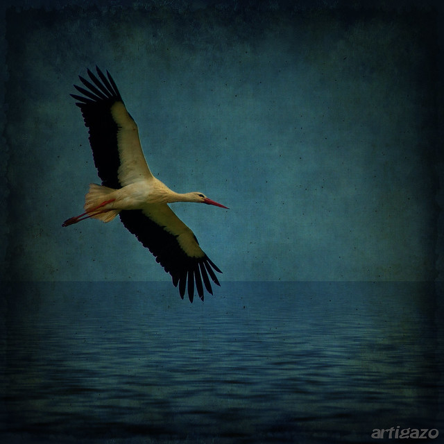 Texturized stork