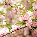 Joy: Blossoms on a Tree by Simply Vintagegirl