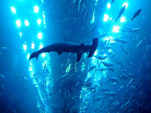 Dubai Aquarium & Underwater Zoo Flickr - Photo Sharing!