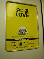 Dog's Trust sponsorship advert in Tube lift