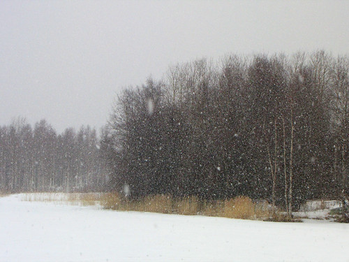 trees lake snow nature forest suomi finland landscape spring scenery oulu snowfall lumi maisema metsä luonto kevät puut kuivasjärvi lumisade vanagram