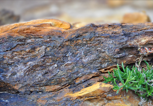 Grapevine Lake rock and plant - #0406-0410