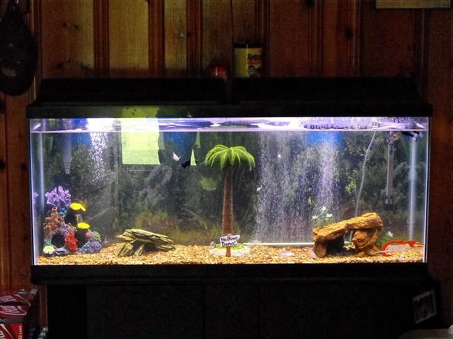 Cheap 55 gallon fish tanks quotes for Cheap 55 gallon fish tank