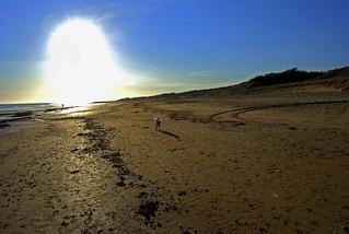 Image de Le Phare. dog chien sun beach soleil sand sable plage