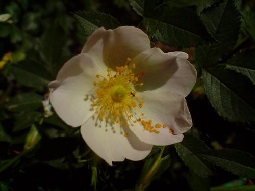 Flower's polen Θ