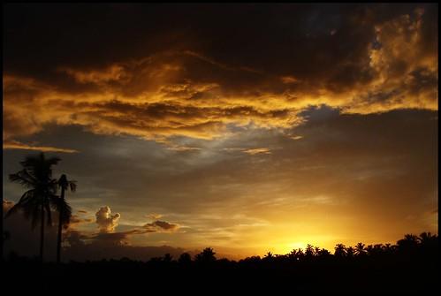 Golden Sky.....