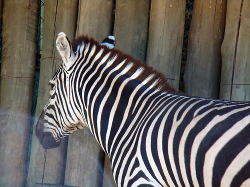 animals that are extinct
