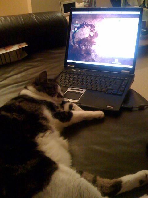 Ubuntu cat