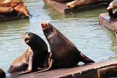 hippopotamus(0.0), wildlife(0.0), animal(1.0), seals(1.0), sea lion(1.0), marine mammal(1.0), fauna(1.0),