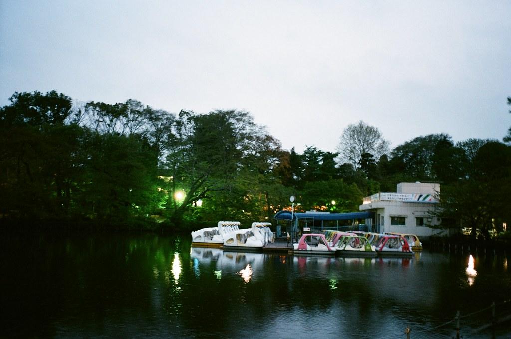 inokashira park at evening