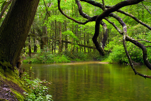 """trees reflection green water leaves nc moss log rocks branches peaceful bank northcarolina trunk lush riverbank gnarled twisty pisgahnationalforest hendersoncounty northmillsriver sittingbytheriver """"flickraward"""" davidhopkinsphotography ncpedia"""