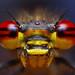Fire eyed Damselfly (Pyrrhosoma nymphula) by Tome Rodrigo