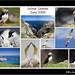 Sea Birds - Saltee Island by Aindreas Lynch