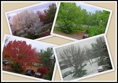 All four seasons - Outside my window