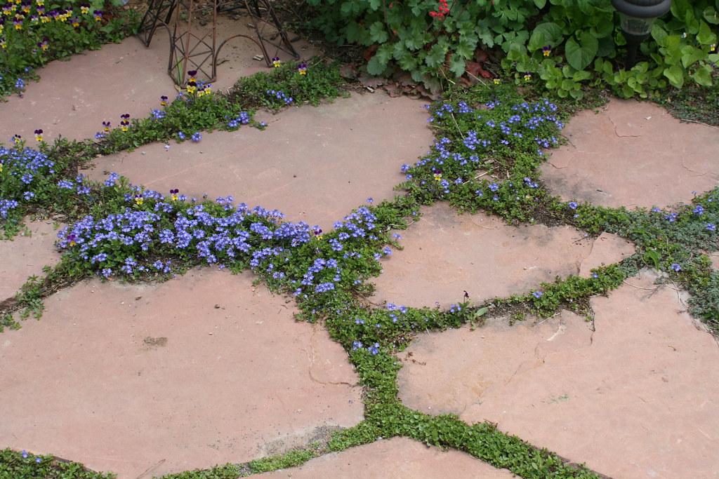 Image Result For Backyard Plantsa