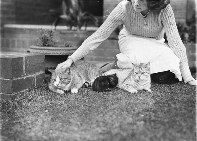 Girl with two cats and a kitten, Sydney, 1930s / Sam Hood