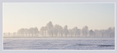 the delicate colours of winter by valka49