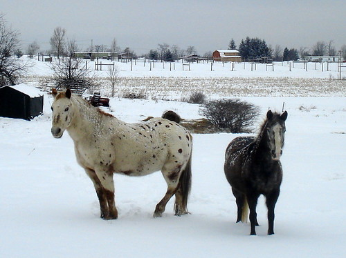 """One Snowy Day at the Farm"""