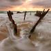 Dicky Beach, Caloundra, QLD by Shaun Lane