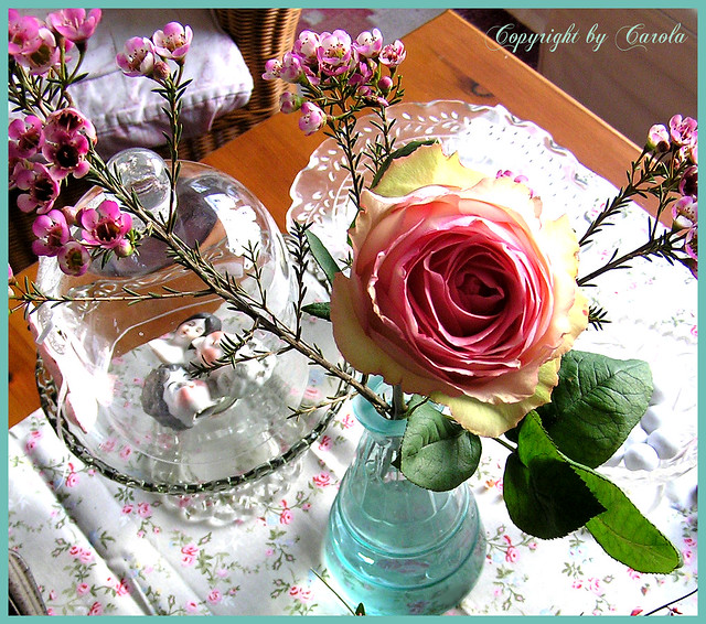 a rose is a rose is a rose flickr photo. Black Bedroom Furniture Sets. Home Design Ideas
