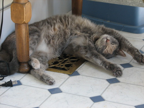 one relaxed cat